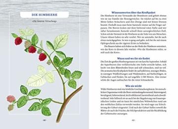 Unser heimisches Superfood: Im Alpenraum sammeln und selber zubereiten - 12